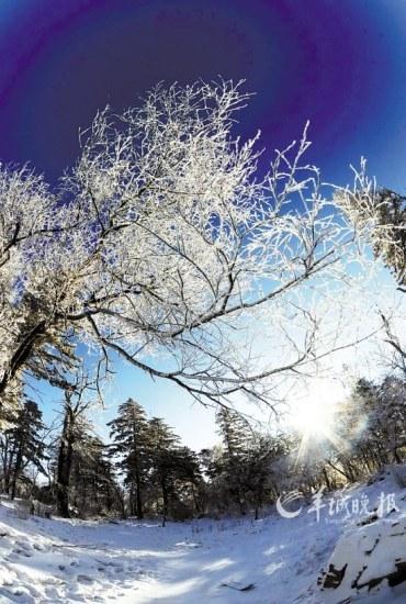 北大壶滑雪场山上的树木布满雾凇