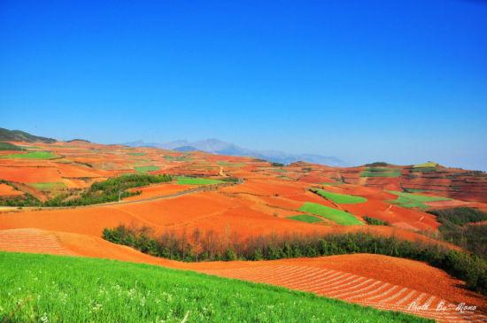 春天,红土地有了一些绿