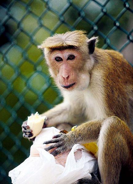 随处可见的调皮猴子,喜欢从游客手中抢夺食物