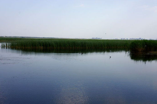 衡水湖归来,心静如水