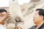 【15日】新乐沙地挖出1万年前大象化石