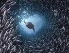 摄影师拍精彩海洋生物