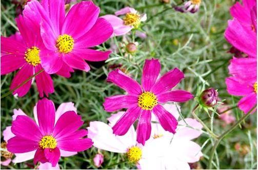白草畔山花