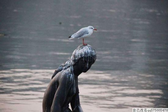新浪河北旅游配图:鸽子窝 自己改名