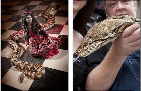 全球最长圈养蟒蛇体长76米