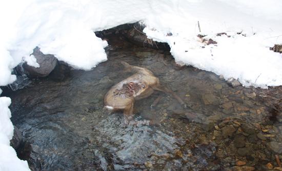 小五台山国家级自然保护区野生动物