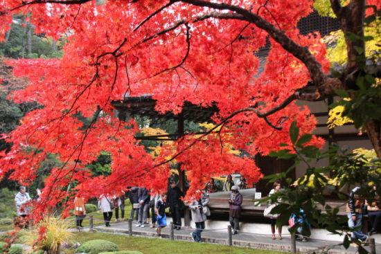 红艳艳的枫叶