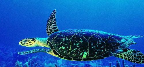 一座海底世界的秘密 欣赏秦皇岛不同的风景