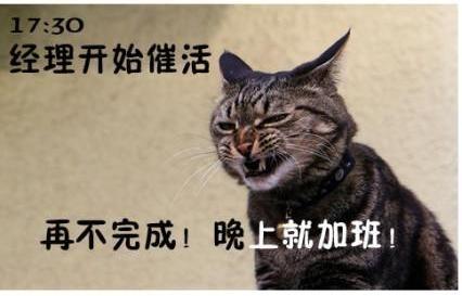 动态搞笑丝表情演绎上班族的一天(8)炮炮兵包情侣表情猫咪图片