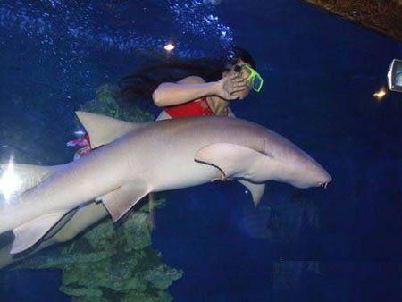 壁纸 动物 海底 海底世界 海洋馆 水族馆 鱼 鱼类 450_338
