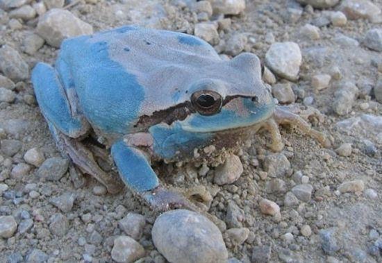 盘点自然界罕见的变异动物