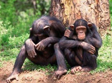 记忆力超越人类的动物
