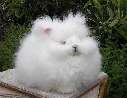 可爱的小兔子轻泥