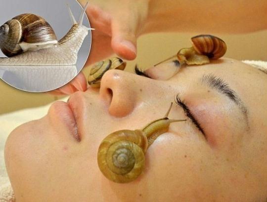 日本沙龍推出活蝸牛美容法黏黏的你敢試嗎