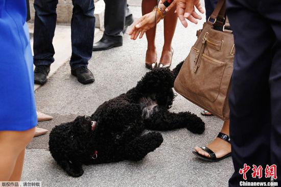 奧巴馬新寵物狗白宮內散步撒歡引媒體圍觀