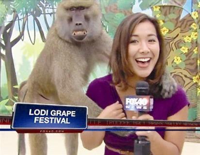 美女主持人播報節目時遭狒狒襲胸(圖)