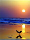 盘点最舒适的十大沙滩