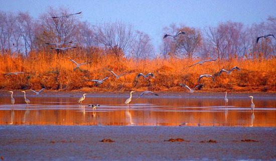 春节期间衡水旅游推荐地:美丽的衡水湖