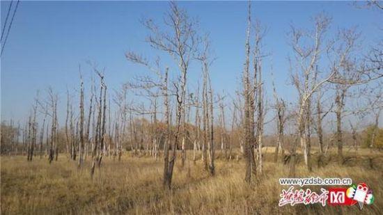 内蒙古大杨树镇区照片