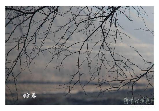 张家口·盼春