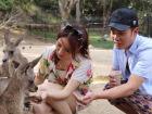 陈赫携妻子畅游澳洲喂食袋鼠享甜蜜时光