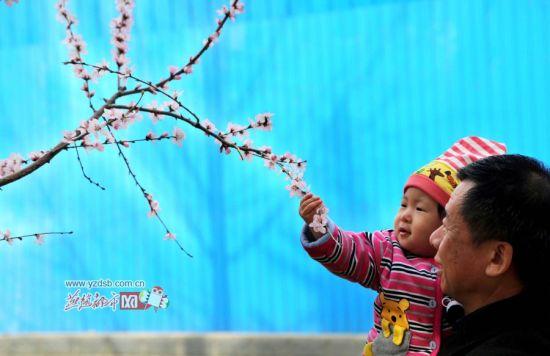 触摸鲜花的儿童。