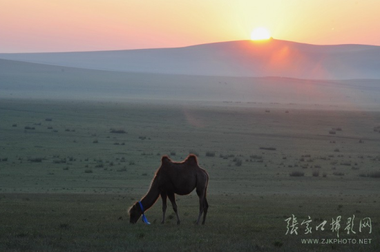 张家口坝上草原之晨