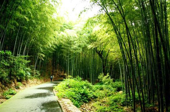 游步道茂密的树林