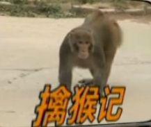 顽猴进城区大闹咬人 警民联合将其捉拿