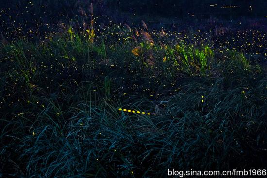 浪漫童话世界土楼萤火虫不是传说