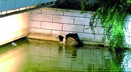男子托举落水爱犬2小时 忘记边牧犬会游泳