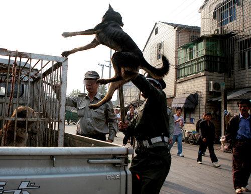 男子不愿交罚款办狗证 溜入城管队偷狗