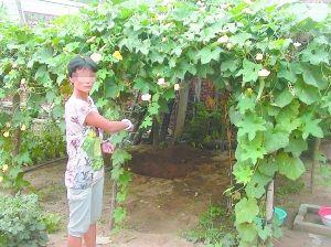 保定农妇将儿子砍头续:想逃跑但被太阳能挂住了