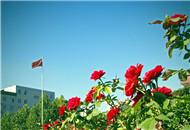 石家庄的蓝天