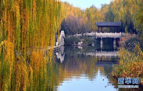 济南大明湖畔金色柳丝如垂帘