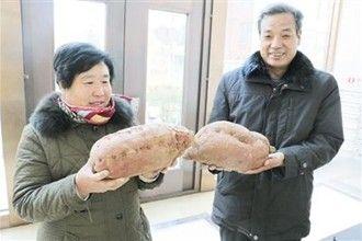 邢台老人种出超大红薯