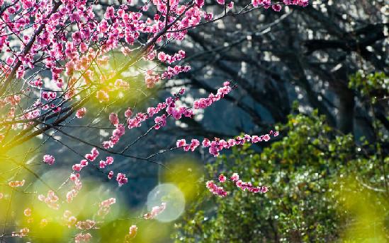 九龙峡桃花节
