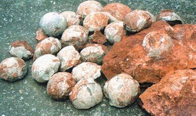 闹市修路挖出43颗恐龙蛋 贪心路人欲私抢文物