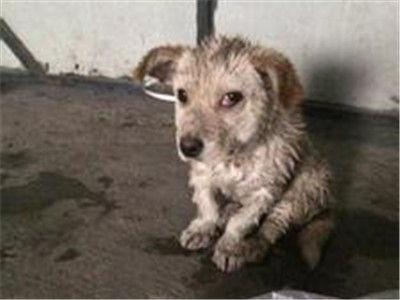 无辜小狗遭主人残暴摔打 小动物保护法引关注
