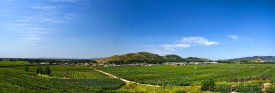卢龙县特色产业——葡萄酒产业_新浪秦皇岛