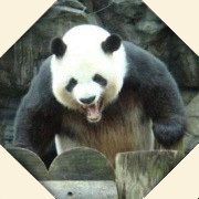 http://weibo.com/u/1915529831