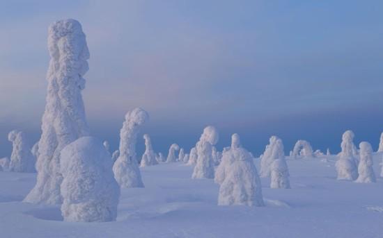 冰封的泰加森林(芬兰)
