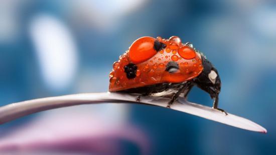 可爱昆虫真实照片