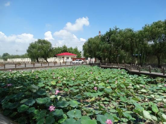 最大 东营/东营最大湿地水生植物研究基地落户孤岛社区