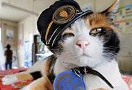 日本猫站长坐镇和歌山
