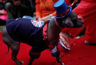 中国冠毛犬成为最丑狗