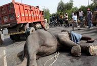 离奇车祸致两大象一死一伤