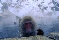 极寒中的猴子