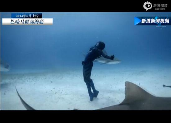 英国美女模特只身潜入深海与虎鲨共舞